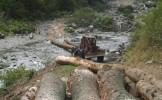 ROMÂNIA sub DRUJBĂ: peste 50 de cazuri de tăieri ilegale de păduri, pe zi!