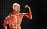 """A fost descoperită o nouă componentă a corpului uman! """"Manualele de anatomie trebuie RESCRISE!&..."""