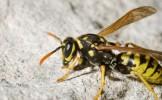 Bărbat ucis de viespi pe un câmp din judeţul Dâmboviţa