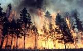 Incendiu de pădure în Munţii Pietrosul Rodnei. 400 de oameni se luptă cu focul