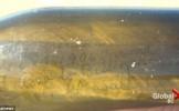 A fost descoperit CEL MAI VECHI MESAJ într-o sticlă! Ce scrie pe bucata de hârtie veche de peste 100...